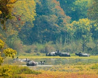 Group of Rhinos in Chitwan