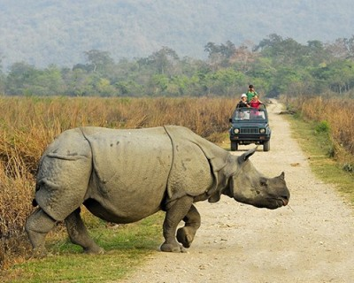 Chitwan Tour of Jungle Safari
