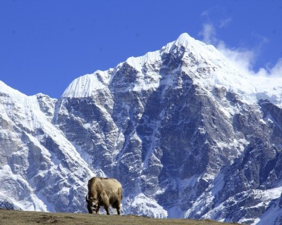 Everest Base Camp Trek from Salleri