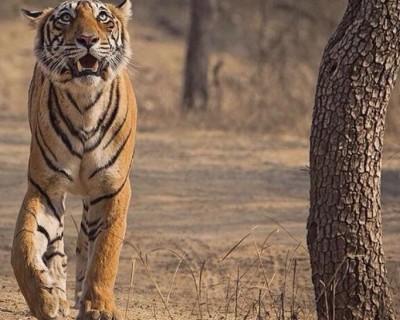Golden Triangle Tour with Varanashi & Wildlife Tour to Ranthambore